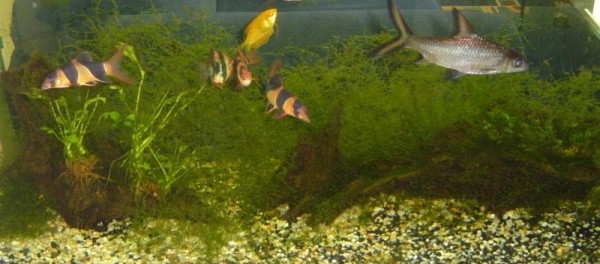 aquarium fishes images. Aquarium Fish Tank